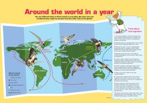 Around the World in a Year